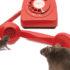 mousepupphone3