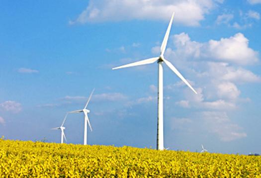 Wind turbines in rapes field - Alternative energy