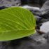 volcanic_plant3