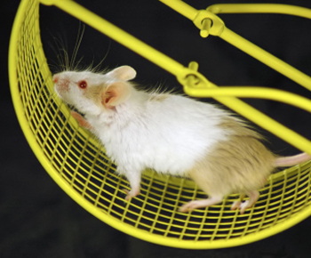mice_treadmill2