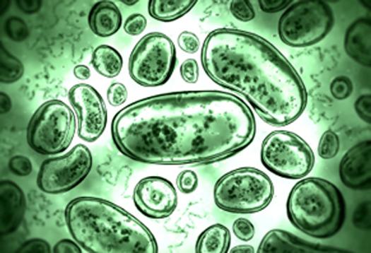 bacteria3