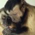capuchins03