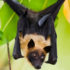 michigan_bat2