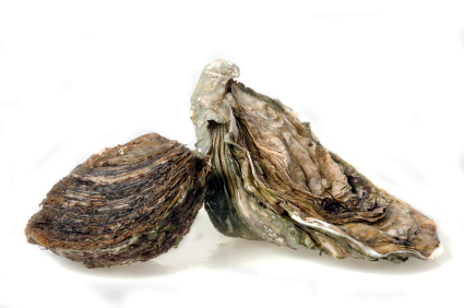 oyster_1