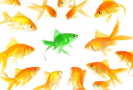 goldfish_1