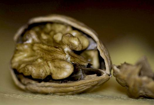 walnutcloseup_1