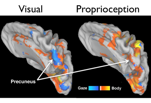 brain map_1
