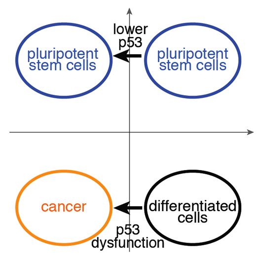 stemcells_cancer_2 (2)