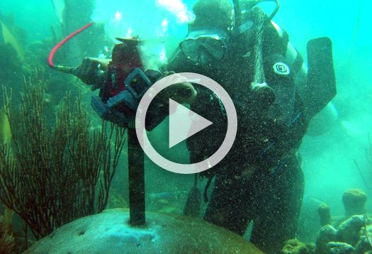 coral_drill_video