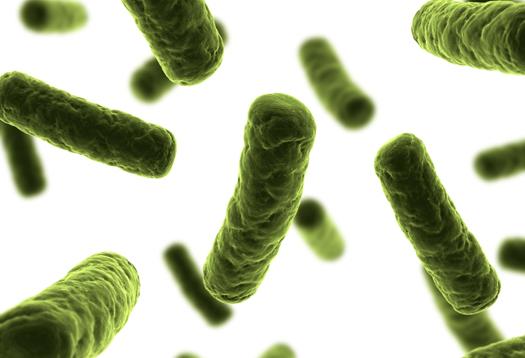 bacteria_green_1