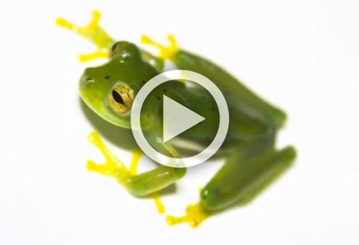 amphib_network_video