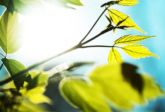 sunlight_plants_1