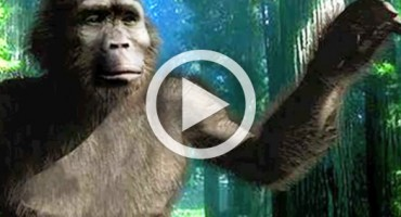 hominid_video