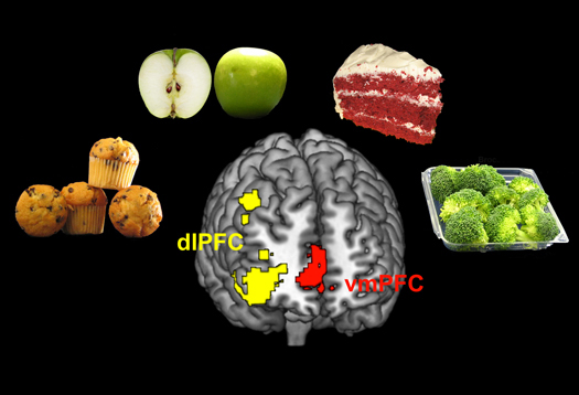 brain_food_caltech_1