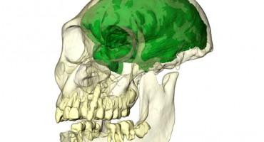 skullcast_Emory_1