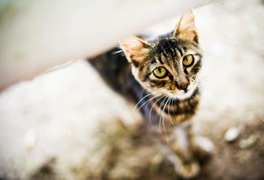 straycat_1