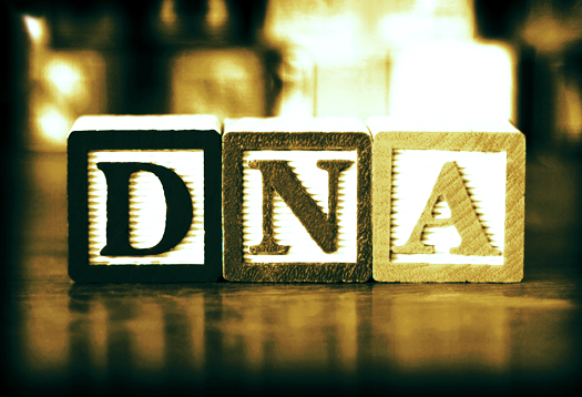 DNA_blocks_1