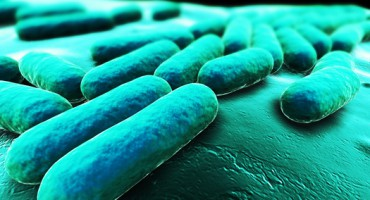 bacteria_gut_1