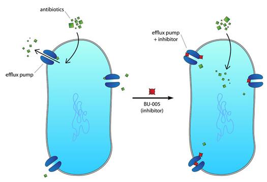 Bacteria1_1