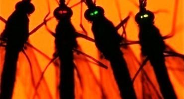 malaria mosquito_1