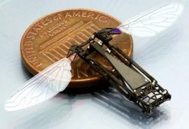 butterfly-MAV coin_1