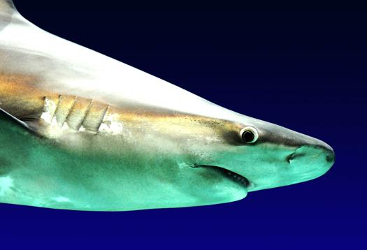 shark_bite_1