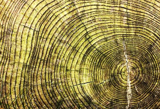 tree_rings_1