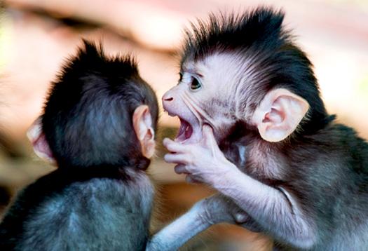 monkeys_525
