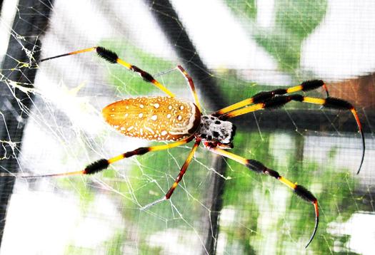 spider1000_1