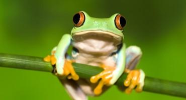 tree_frog2_1