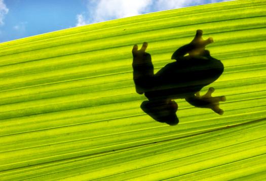 frog_silo_525