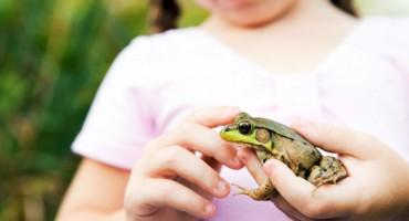 girl_frog_1