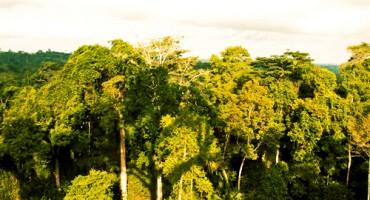 Ghana_trees_525