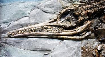 Ichthyosaurus_fossil_1