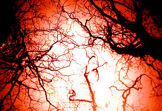 capillaries_525