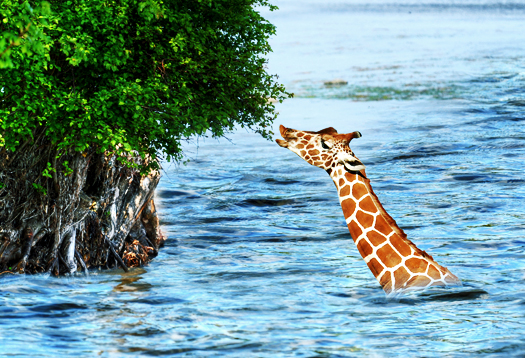 flood_giraffe_525