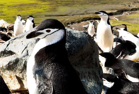 penguins_52_©Thoma sMueller