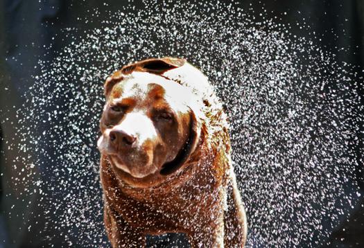 wet_dog_1