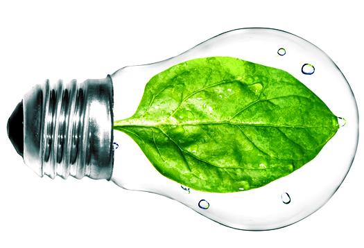spinach_bulb_525