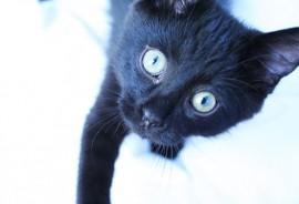 black_kitten_1