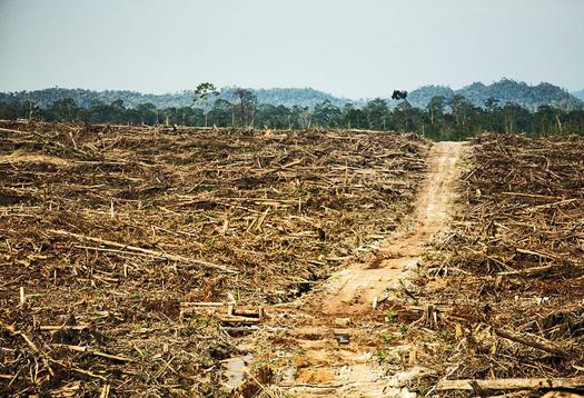 palm_oil_farm_1