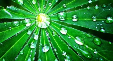rain_leaf_1