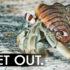 crab_getout