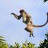 monkey_jump_1