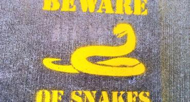 snake_warning_525