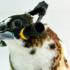 birdheadphones