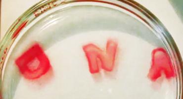 pink_DNA_hydrogel_525