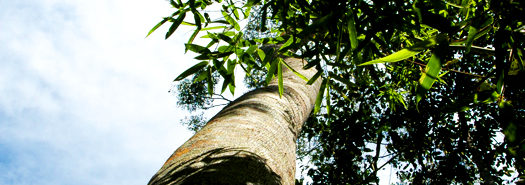 trees_lowangle_525
