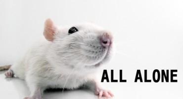 addicted_rat_1