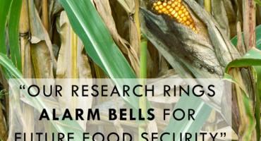 corn_alarmbells_525